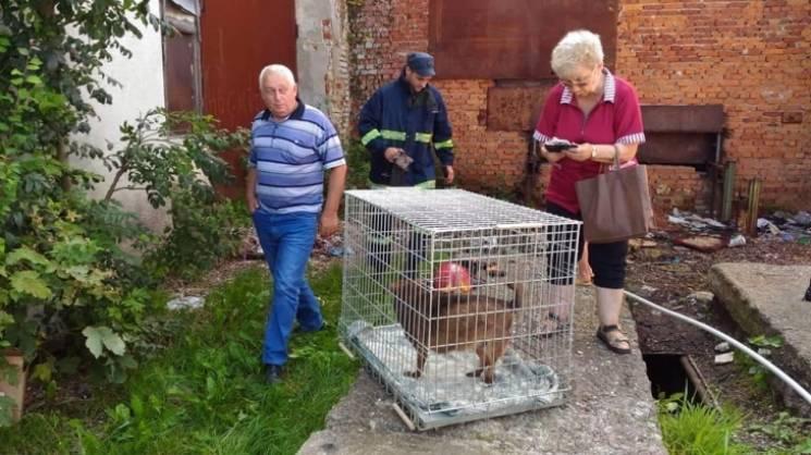 На Прикарпатті врятували собаку, яка прожила рік під землею (ФОТО, ВІДЕО)