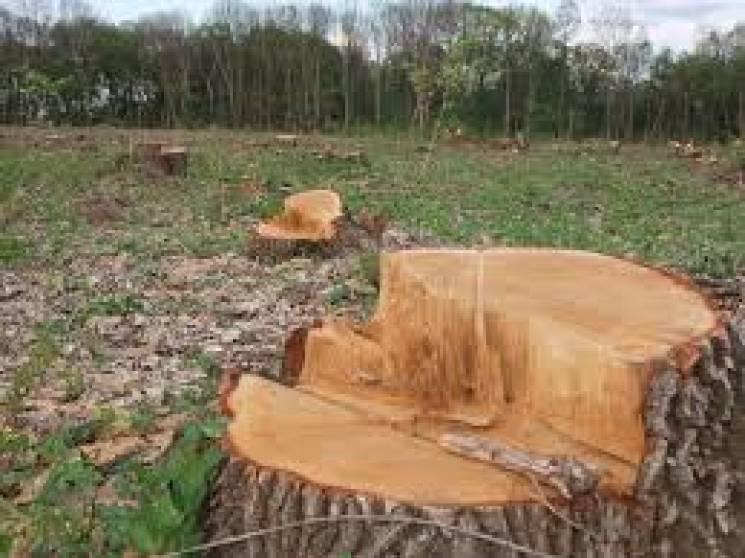Майже на 100 тис. грн нарубали невідомі дерев в Ізяславському районі