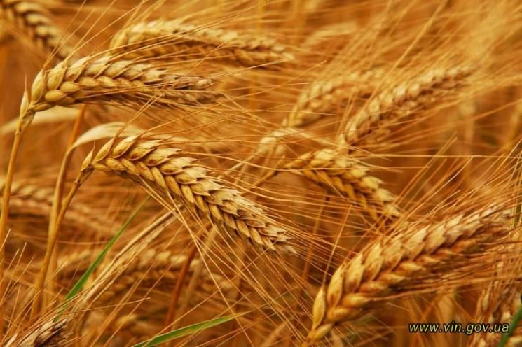 На Вінниччині зібрали два мільйони тонн зернових
