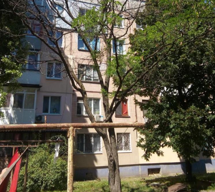 У Кропивницькому з п'яти дерев, що заявили на знесення, два виявились цілком нормальними (ФОТО)