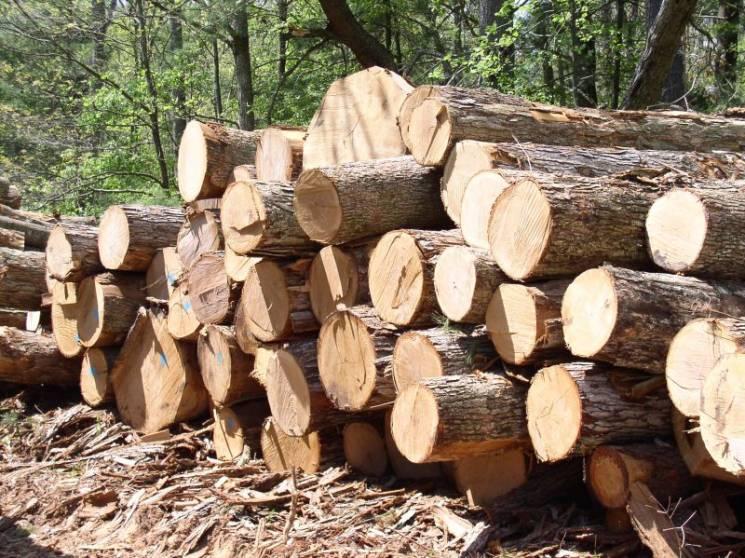 """Стало відомо, куди з початку року """"йшла"""" закарпатська деревина (ІНФОГРАФІКА)"""