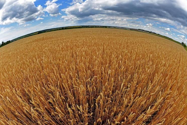 На Сумщині намолотили перший мільйон тонн зерна