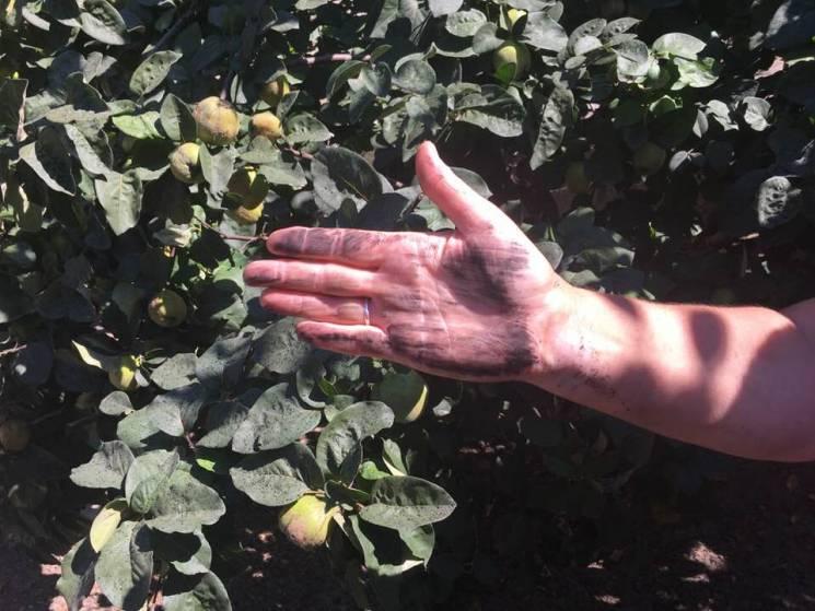 Екологічне лихо: Село на Вінниччині засипало сажею (ФОТО)