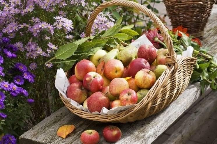 Яблучний Спас: Як відзначають велике свято Преображення Господнього