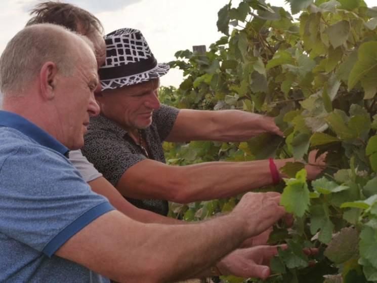 Скрипка на Закарпатті виготовлятиме авторське вино (ФОТО)