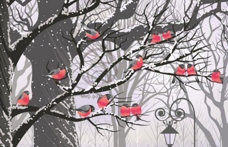 Закарпаття: прогноз погоди на 5 грудня - загляньте у гніздо