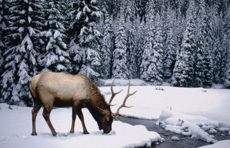 Закарпаття: прогноз погоди на 10 грудня - день Романа Преподобного