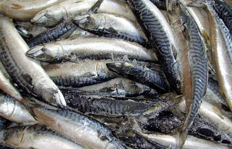 """""""Млинці на лопаті"""" по-київськи: У столичному маркеті пенсіонери мало не побилися  за дешеву рибу"""