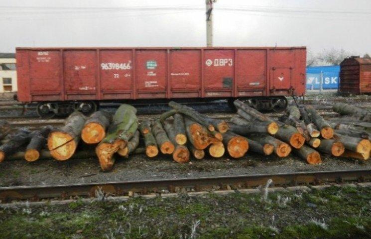 Закарпатські митники затримали на кордоні сім тонн деревини