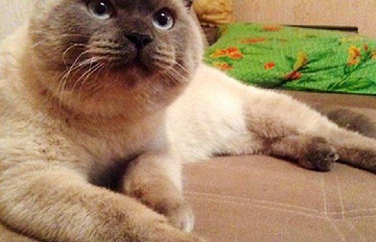 На России, в одном из городов, мэром избран кот Барсик