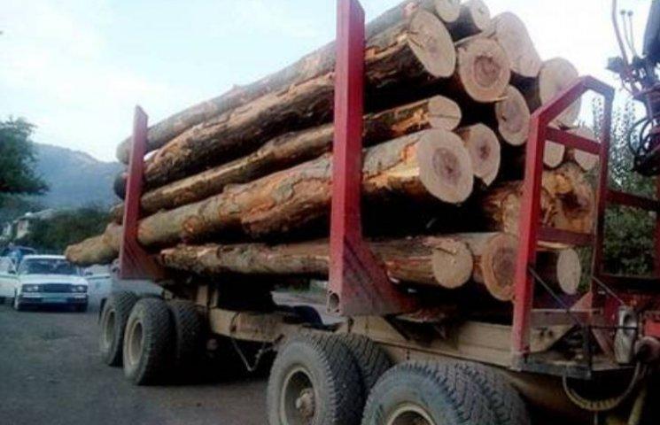 На Закарпатті продовжують ловити вантажівки з лісом