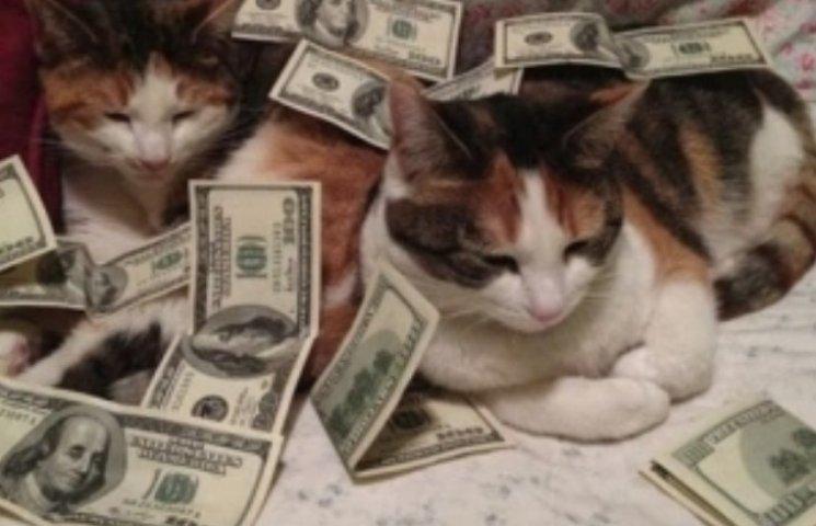 Бродячі італійські коти успадкували квартиру за 230 тис євро