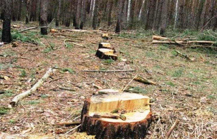 На Закарпатті незаконно нарубали лісу на 100 тис грн