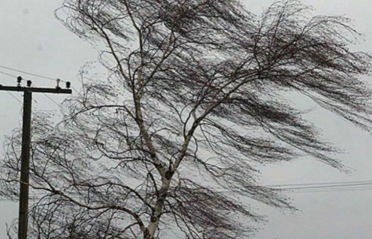 Киянам рекомендують не виходити на вулицю: Через шквальний вітер падають дерева
