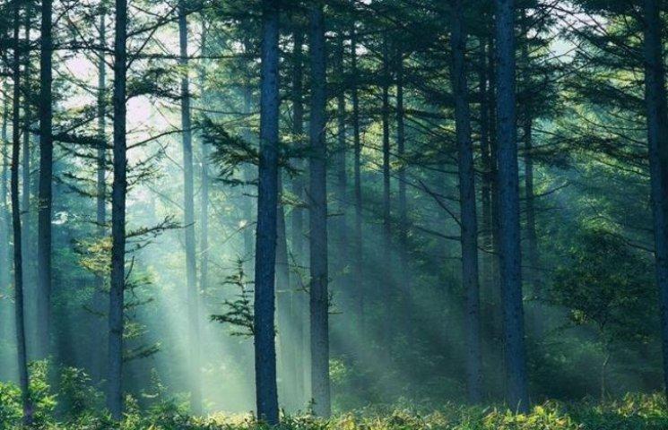 На Тячівщині незаконно роздали землі у лісовому масиві