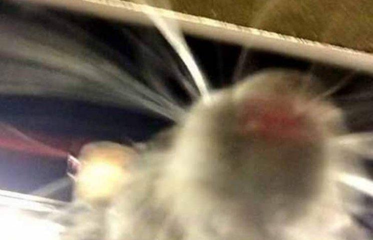 Де не треба засинати, аби пацюк не залишив своє фото у вашому мобільному