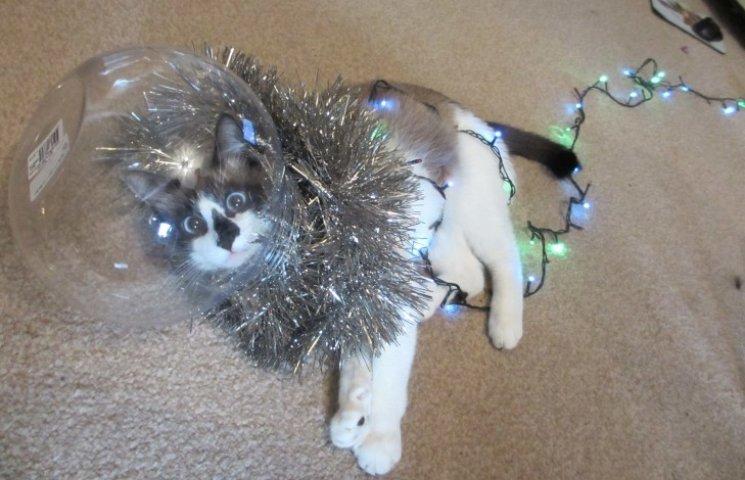 Как защитить елку от ребенка и кота