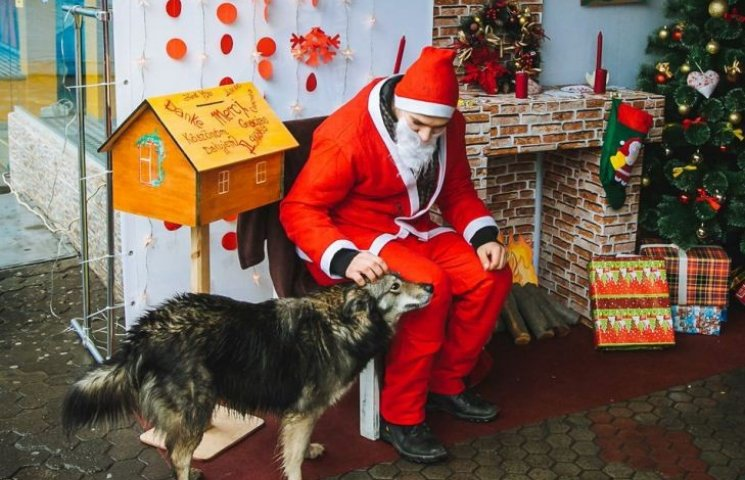Зворушлива сцена: бездомний собака лащиться до Миколайчика