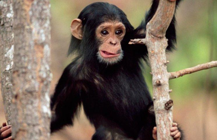 Символы-2016: самые известные и прикольные обезьяны в мире