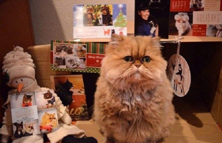 Как выглядит кошка, которая ненавидит Рождество