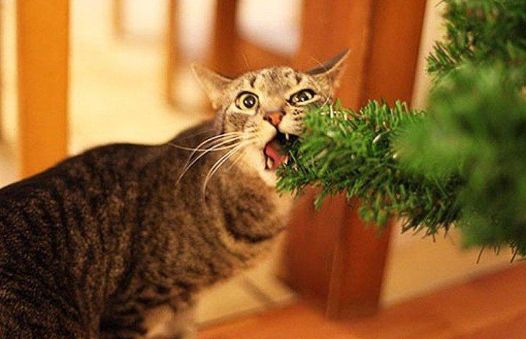 Пухнастики, які оголосили «війну» Новому року та Різдву