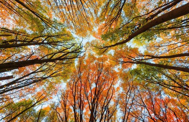 Нинішня осінь у Києві стала найдовшою за 135 років спостережень