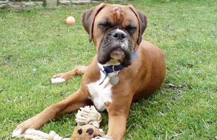 Британская пара потратила $100 тысяч, чтобы клонировать умершую собаку