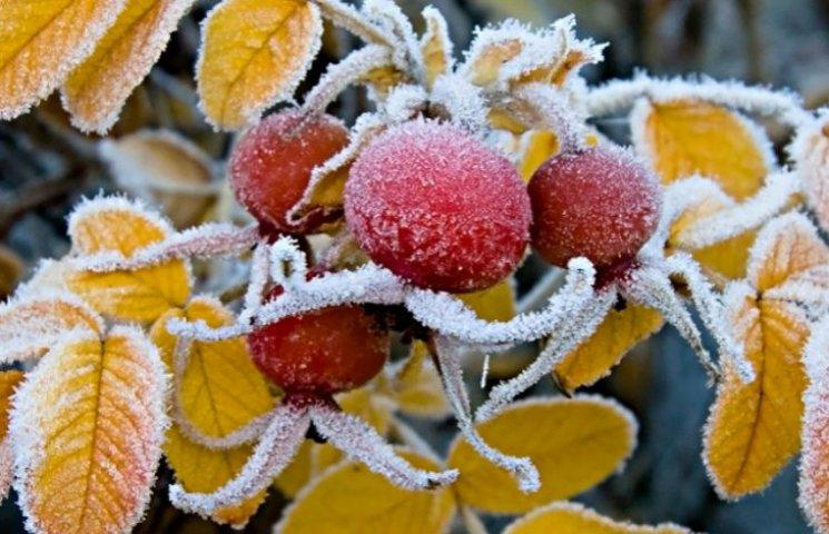 На Новий рік до Києва йдуть морози