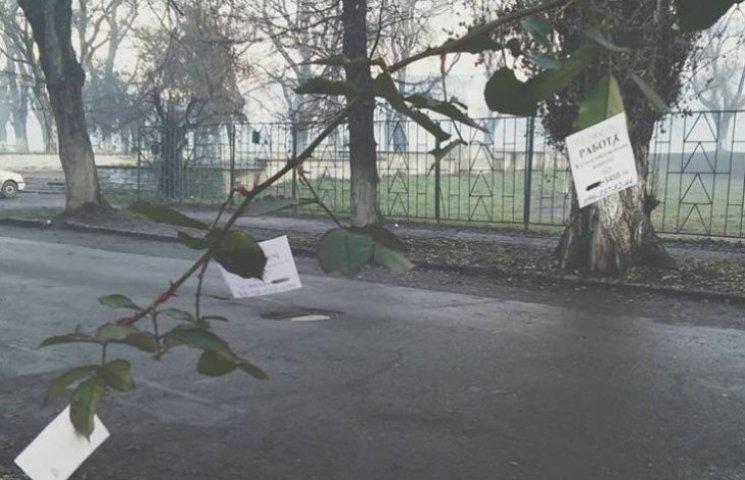 Як в Ужгороді вуличні оголошення кріплять степлером до троянд
