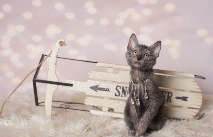 Страшного Різдва: фотосесія котів-перевертнів налякала інтернет