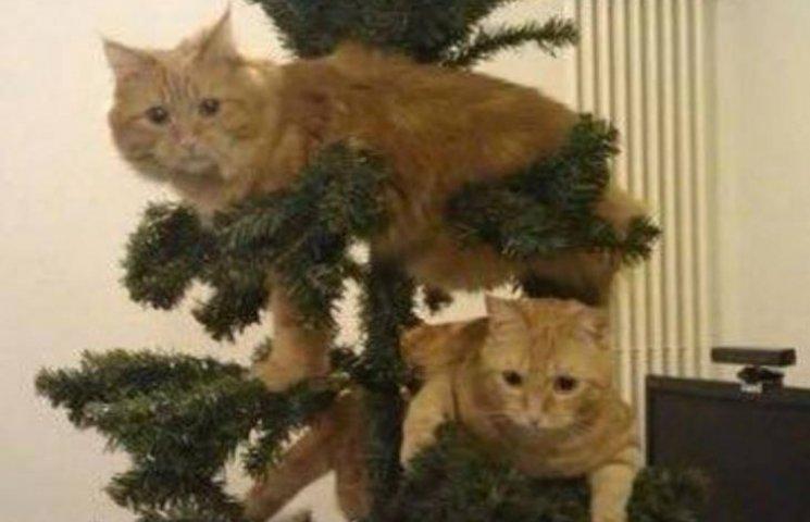Як коти стають найкращими прикрасами для новорічних ялинок