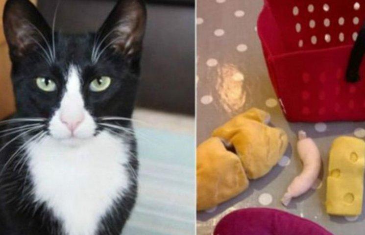 Британский кот-клептоман украл много вещей к Рождеству