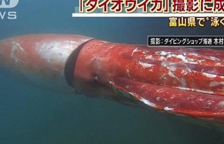 Самое ужасное видео дня: Как выглядит 4-метровый кальмар