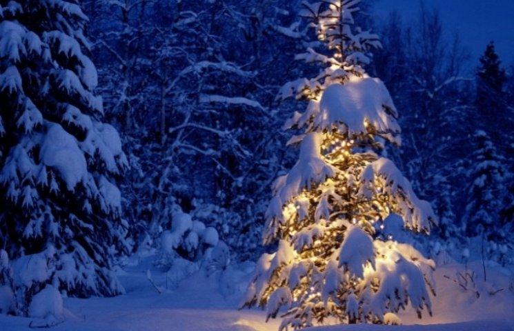 Зворушливе відео: Закарпатська малеча вітає усіх з Новим роком і Різдвом