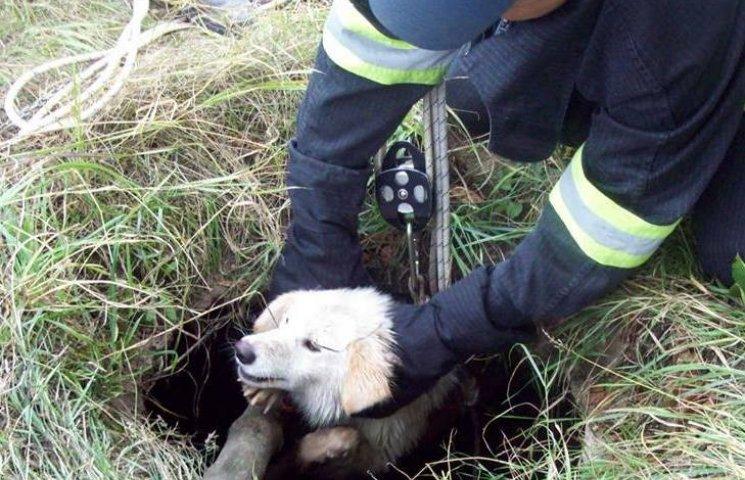 У Вінниці чотирилапого рятували з каналізації