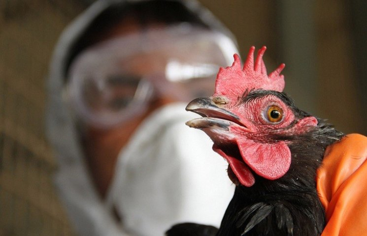 В Україну повернувся пташиний грип: спалах - на Херсонщині