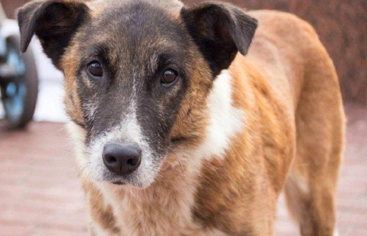 """Мер столиці Західного Донбасу """"гуманно позбавиться"""" усіх бездомних собак"""