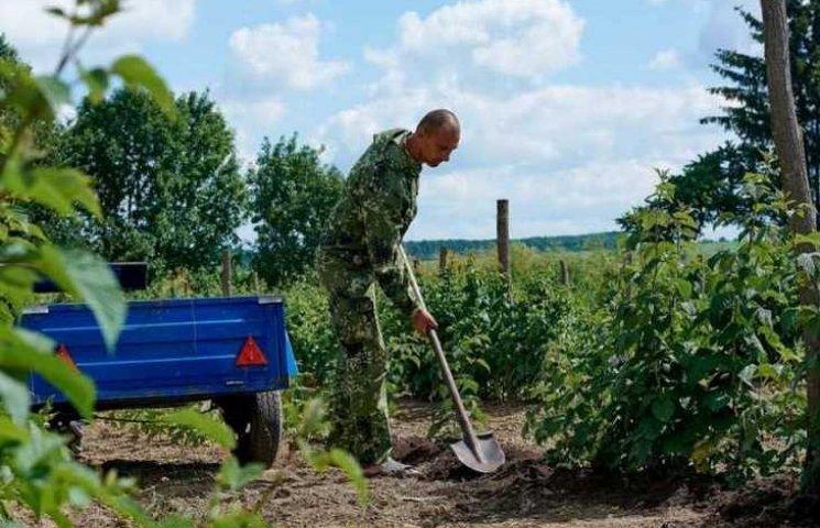 Вінничанин, повернувшись з АТО, почав вирощувати малину