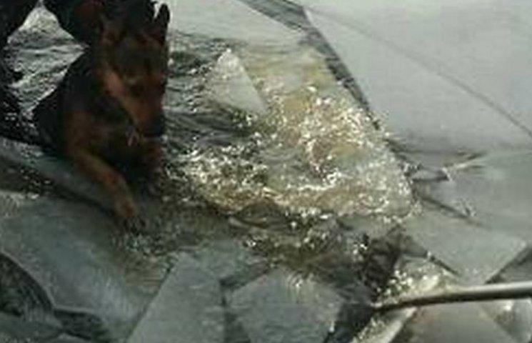 Як на Вінниччині рятували пса, що провалився під лід