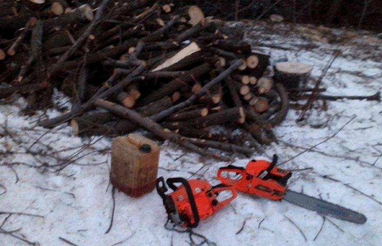 На Полтавщині поліцейські спіймали чоловіка, який знищував дерева