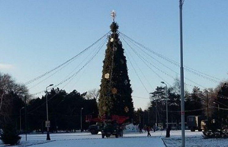 Центральная елка в Днипре признана второй по высоте в Украине