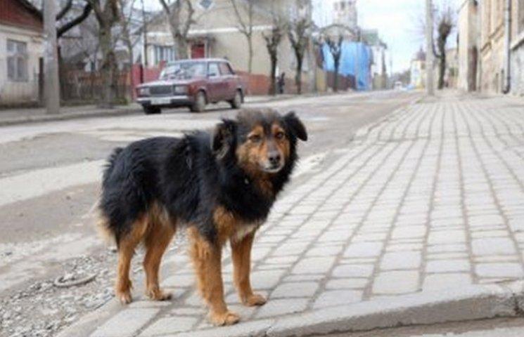 У Філатова шукають цілодобових мисливців за собаками