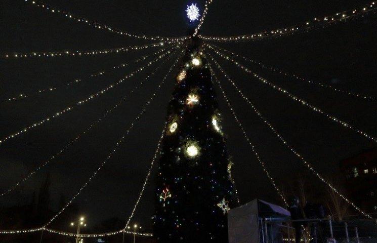 В Днипре открыли самую высокую натуральную новогоднюю елку