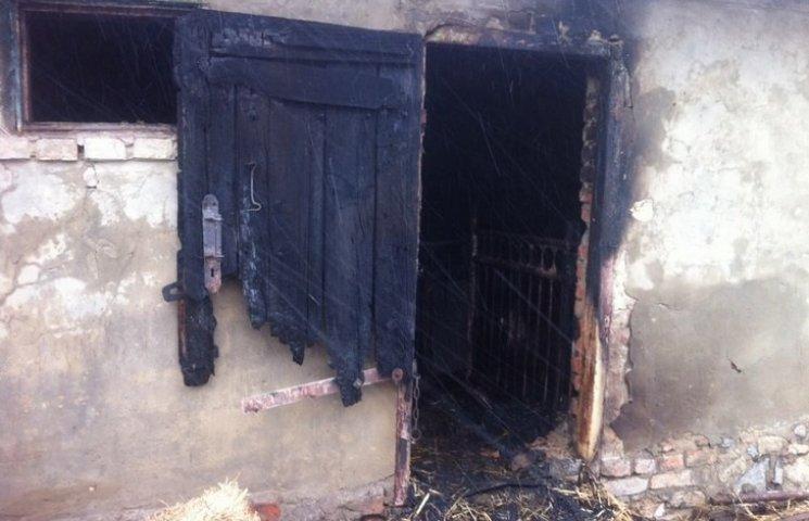 На Вінниччині в сільському дворі згоріли хата, хлів, корови і свині