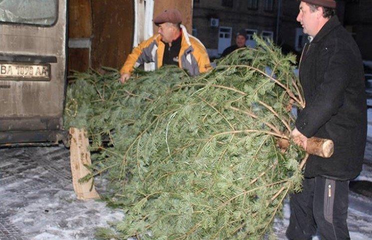 До військового шпиталю Дніпра привезли ялинки з Івано-Франківщини