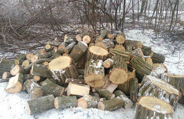 На Полтавщині місцеві жителі випилюють лісопосадки на дрова