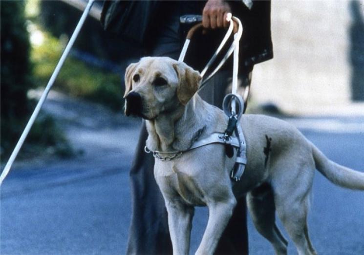 На Росії незрячих людей з собаками-повод…