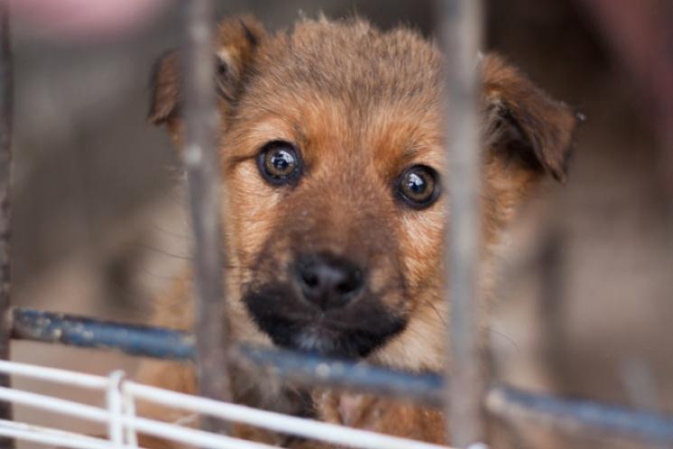 У Мукачеві на програму захисту тварин виділять майже 4 млн грн