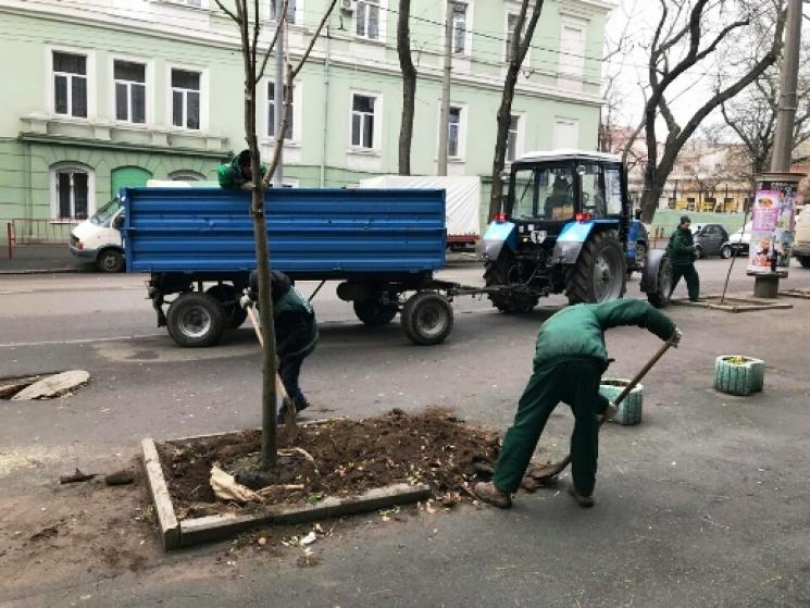 В Одесі продовжують висаджувати дерева навіть у грудні