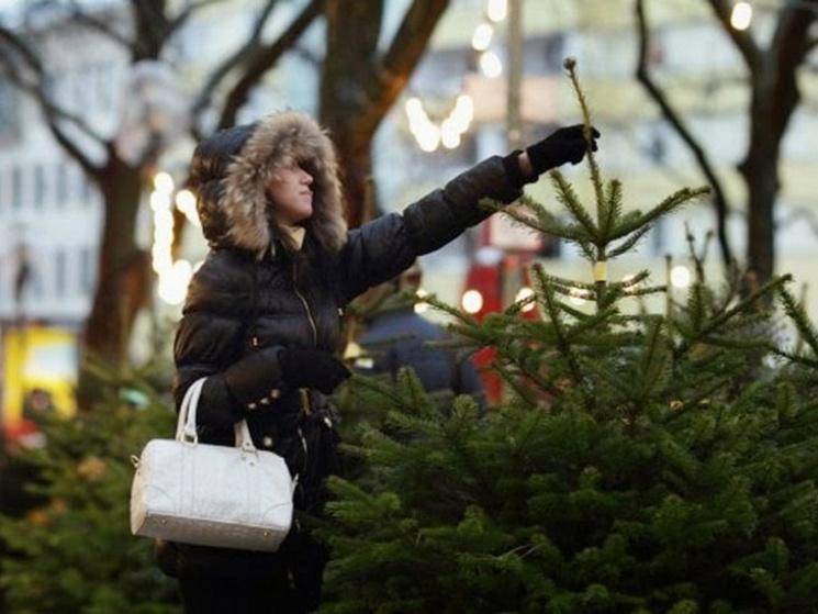 У скільки полтавцям цьогоріч обійдеться новорічна ялинка
